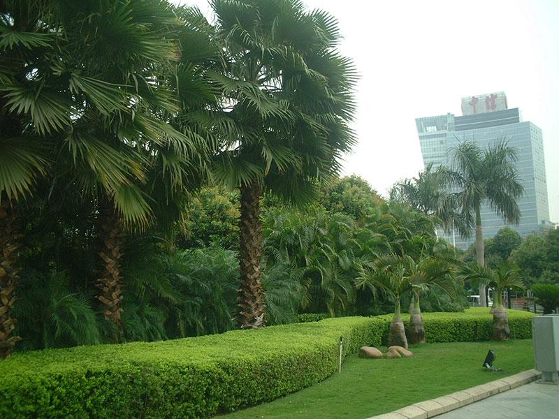 公园绿化施工