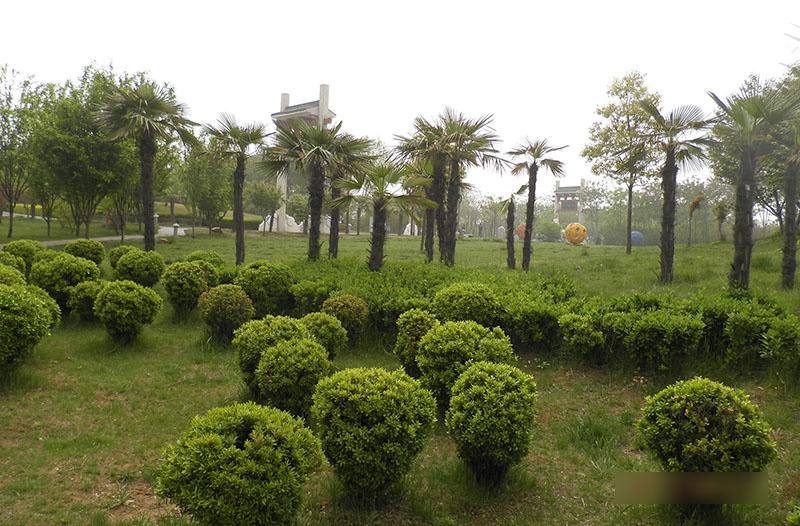 公园景观一角